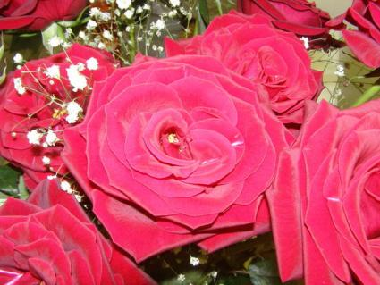 Some Red Roses