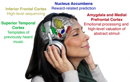 How Music Affects the Brain diagram | Photo © Peter Finnie and Ben Beheshti