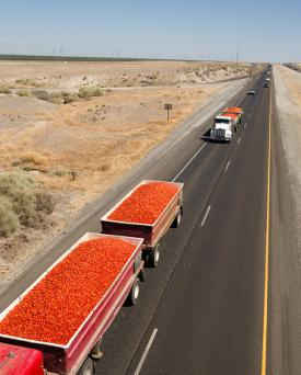 Truckloads of tomatoes