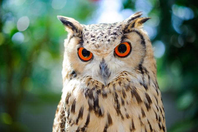 essay owl Compare & contrast essay compare and contrast is a rhetorical style that discusses the similarities and differences of two or more things: ideas, concepts, items, places, etc.