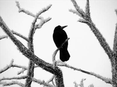 A spooky raven