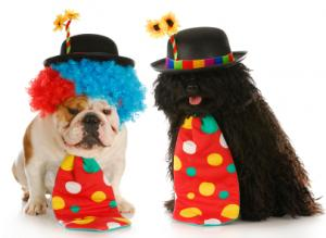 clown costume dogs