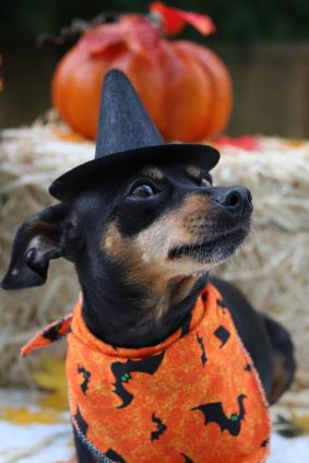 dog at Halloween party