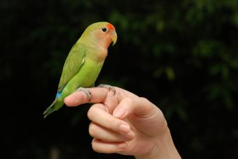 Beautiful Parrot Pet