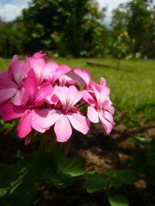 Flower Photography Techniques