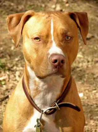 Pitbulls And Parolees Cast Benefits Of Being A Dog Trainer