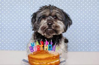 Happy Birthday to your pet