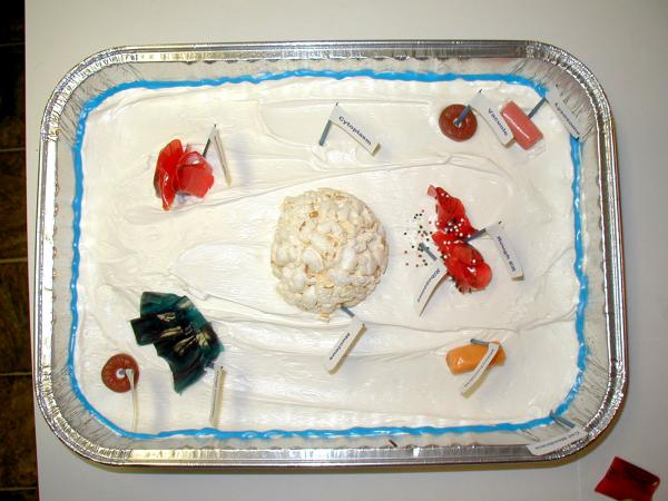 animal cell cake project