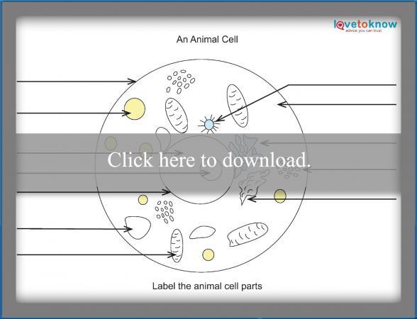 Basics of Plant Cell Biology – Cell Worksheet