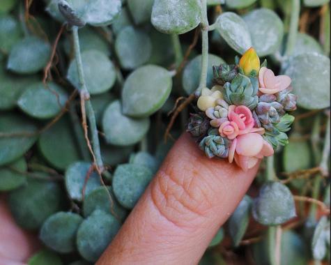 succulent manicure