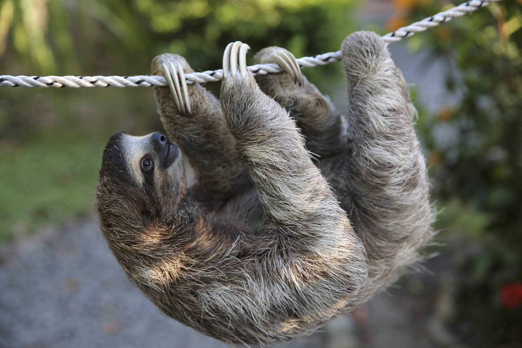 Sloth going to the bathroom - Sloth Going To The Bathroom 54
