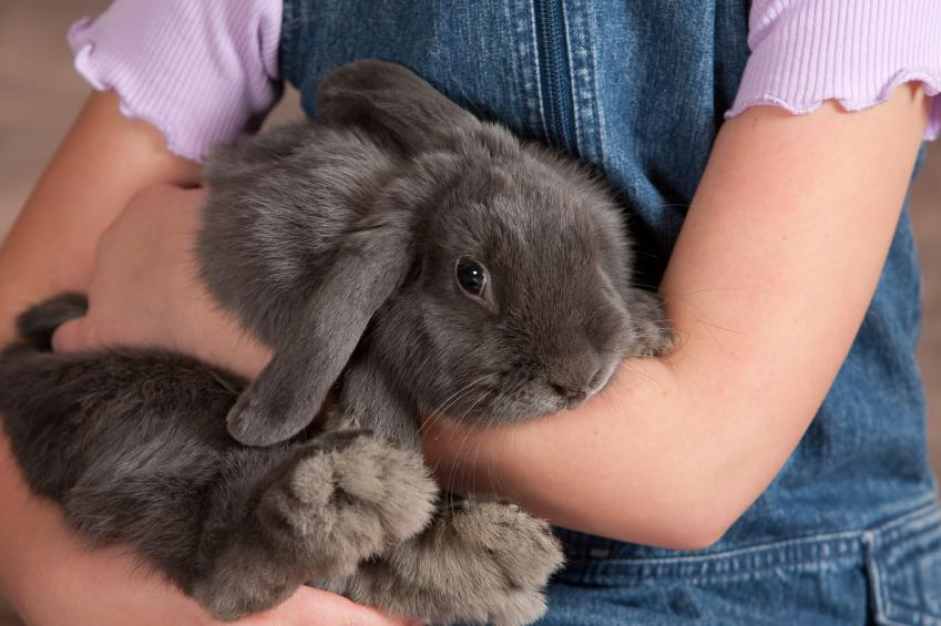 How to take care of a Rabbit?????