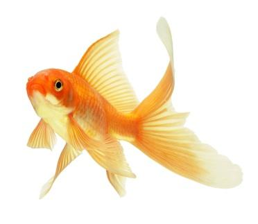 How To Take Care Of Goldfish Lovetoknow