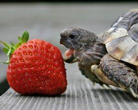 Turtles Being Turtles