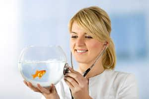 Woman playfully holding a stethoscope to her goldfish bowl