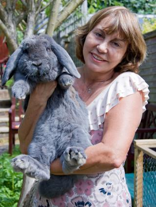 Blue French Lop rabbit; © Claudiabriggs | Dreamstime.com