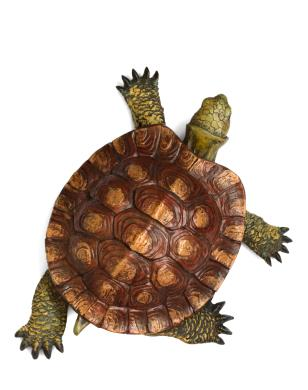 types of pet turtles lovetoknow