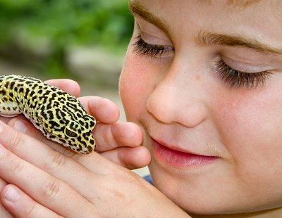 Pet lizard