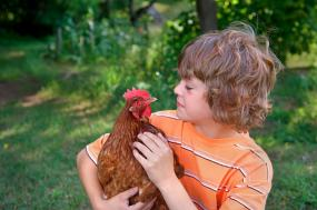 Child holding pet chicken