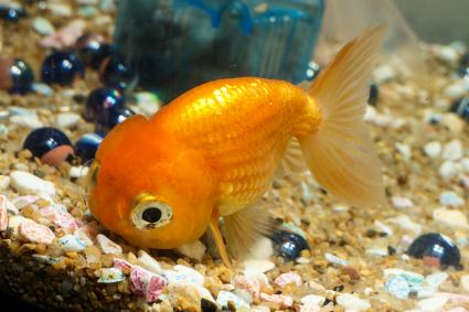 Funny Pet Names for Fish