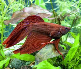 Do betta fish sleep lovetoknow for How do fishes sleep