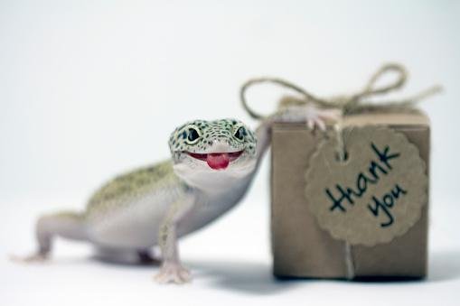 Gecko with thank you gift box