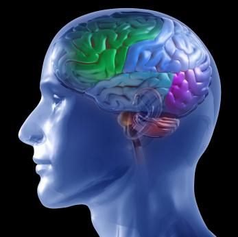 Profile of Brain