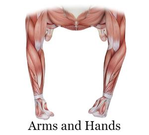 arms and hands