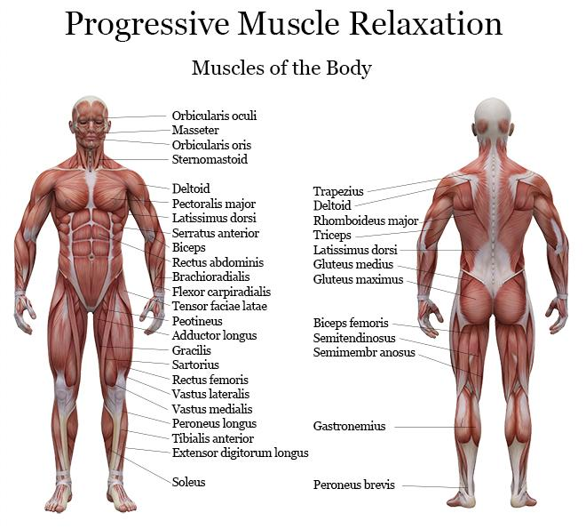 178975-660x595-progressive-muscle-relaxation, Muscles