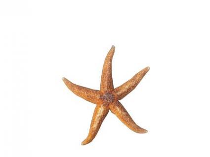 starfish tattoo. Starfish Tattoos