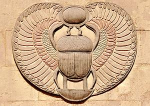 Scarab beetle of Egypt