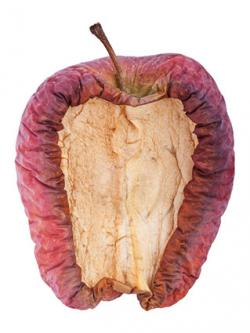 Mummified apple