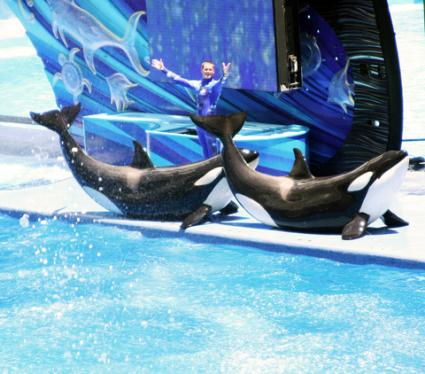 Seaworld Shamu show in Orlando; © James Elliott | Dreamstime.com