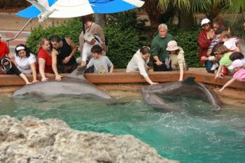 Petting dolphins at SeaWorld Orlando; © Drserg | Dreamstime.com