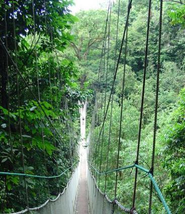 Rope Bridge in Costa Rica