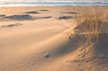 Hamptons Sand Dune
