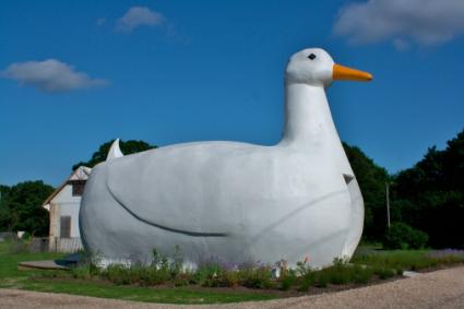 Giant Duck Building