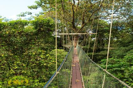 Canopy walk at gunung mulu