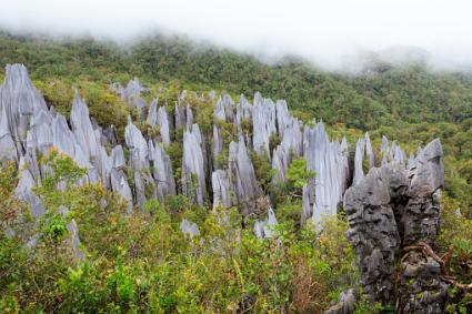 Limestone pinnacles at gunung mulu