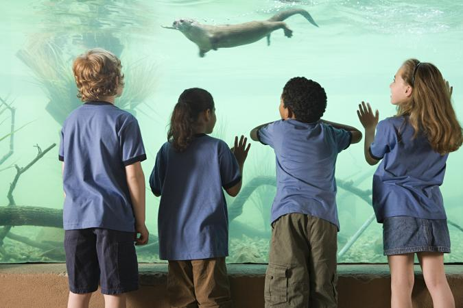 Kids looking at aquarium