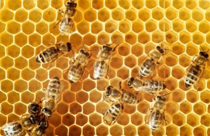 Raw Honey Is Best