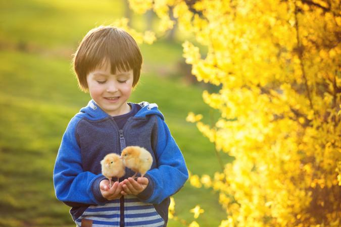 Boy holding baby chicks