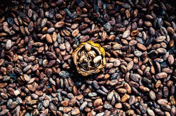 cacao beans dring