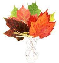 Радуга листьев