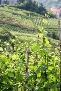 vines up close