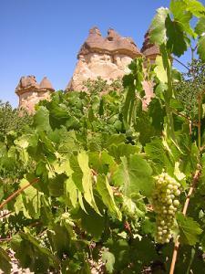 Cappadocia Vineyard