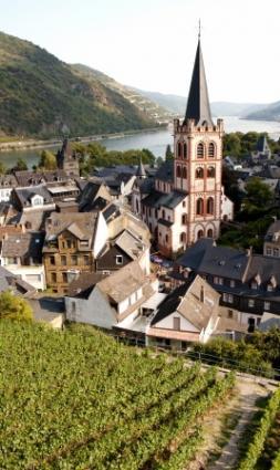 Vineyard overlooking the Rhine in Germany