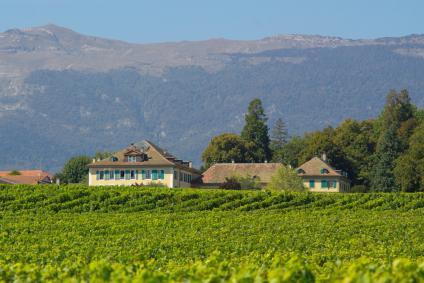 A vineyard in the Rhone region of France