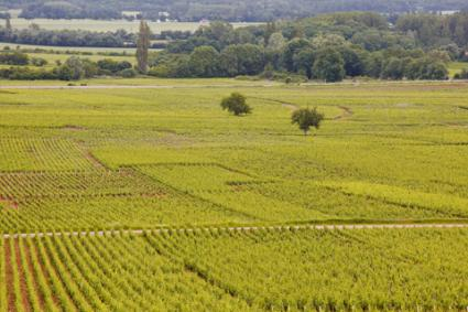 Beaune vineyards; © Julianelliott | Dreamstime.com