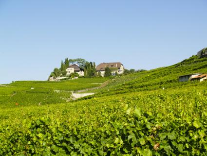 Vineyards in Cahors; © Parys | Dreamstime.com